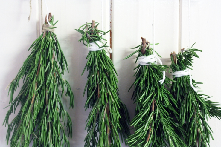 dried_rosemary