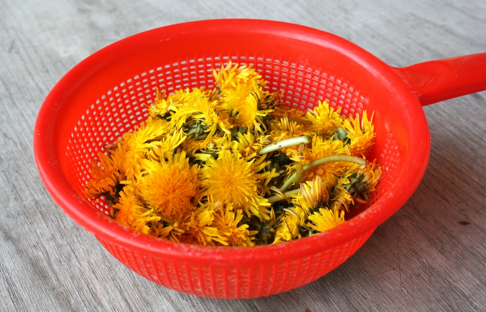 dandelion-honey1